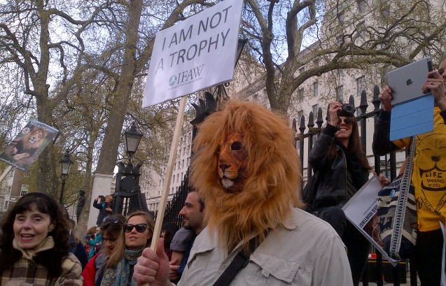 Stop Lion Trophy Hunting